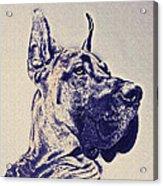 Great Dane- Blue Sketch Acrylic Print by Jane Schnetlage