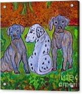 Great Dane Pups Acrylic Print
