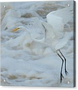 Egret Above Cloud Or Water Acrylic Print