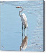 Great Egret And Reflection Acrylic Print