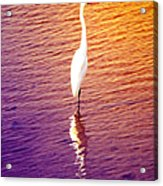 Great Egret At Sundown  Acrylic Print