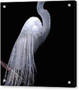 Great Egret I Acrylic Print