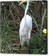 Great Egret In The Green Acrylic Print