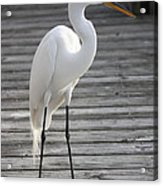 Great Egret On The Pier Acrylic Print