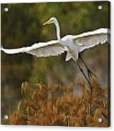Great Egret Pixelated Acrylic Print