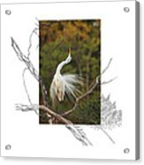 Great Egret - Stretch Acrylic Print