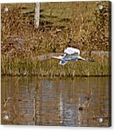 Great Egret Wing Water Reflections Acrylic Print