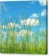 Great Fields Acrylic Print