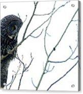 Great Grey Owl On Watch Acrylic Print