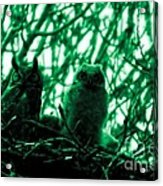 Great Horned Owl And Owlet Acrylic Print