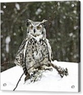 Great Horned Owl In A Winter Snow Storm Acrylic Print
