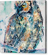 Great Horned Owl In Gold Acrylic Print