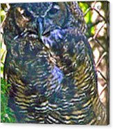 Great Horned Owl In Salmonier Nature Park-nl Acrylic Print
