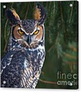 Great Horned Owl Acrylic Print by Mike Mulick
