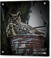 Great Horned Owl On Nest Acrylic Print