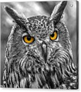 Great Horned Owl V9 Acrylic Print