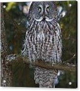 Great Owl Eyes Acrylic Print