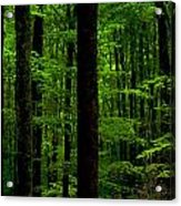 Great Smoky Mountains Forest Acrylic Print