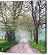 Great Smoky Mountains National Park Cades Cove Country Road Acrylic Print by Dave Allen