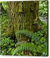 Great Support Acrylic Print