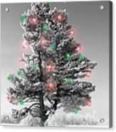 Great White Christmas Pine Acrylic Print