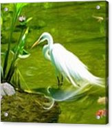 Great White Egret Bird With Deer And Fish In Lake  Acrylic Print