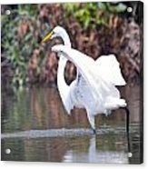 Great White Egret Fishing 1 Acrylic Print