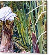 Great White Heron Sanctuary Acrylic Print