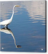 Great White Reflected Acrylic Print
