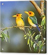 Green And Gold - Yellow-billed Kingfishers Acrylic Print