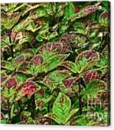 Green And Purple In Nature Acrylic Print