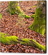 Green And Red Nature In The Forest Acrylic Print