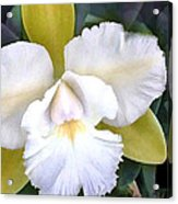 Green And White Cattleya Orchid Acrylic Print