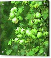 Green Apple On A Branch Acrylic Print