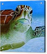 Green Back Turtle Acrylic Print by David Hawkes
