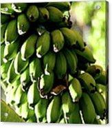 Green Bananas Acrylic Print