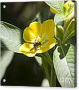 Green Bee Acrylic Print