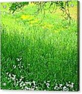 Green Acrylic Print by Beverly Hammond
