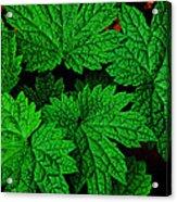 Green Burst Acrylic Print by James Hammen
