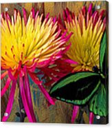 Green Butterfly On Fire Mums Acrylic Print