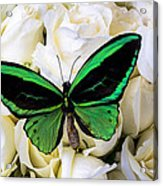 Green Butterfly On White Roses Acrylic Print