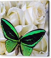 Green Butterfly With White Roses Acrylic Print