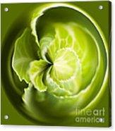 Green Cabbage Orb Acrylic Print