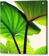 Green Canopy Pastel Acrylic Print