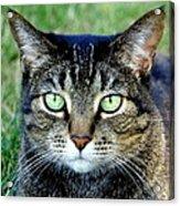 Green Cat Eyes In Summer Grass Acrylic Print