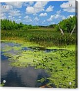Green Cay Nature Preserve Beauty Acrylic Print