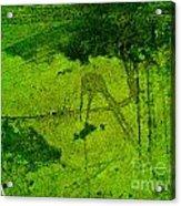 Green Color Sigh Acrylic Print