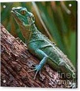Green Crested Basilisk Acrylic Print
