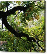 Green Days Acrylic Print