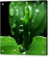 Green-dew Acrylic Print